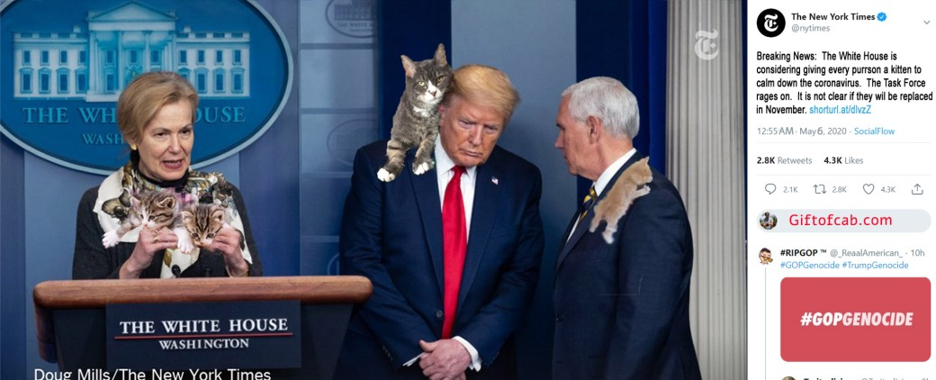 trump kitten plan